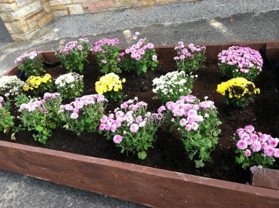 Raised Planter in Trenton, NJ