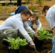 guys planting