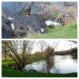 DAY 42 Branch Brook Pond Before and After JC 04